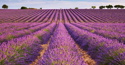 The city of Aix-en-Provence