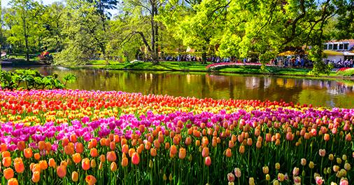 Keukenhof Gardens Holland Netherlands, near Amsterdam